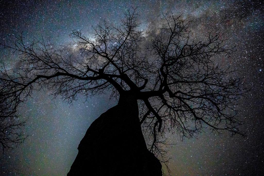 Baobab in Simbabwe