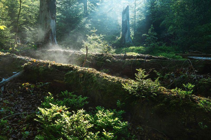 Die Sonnenstrahlen geben einen Blick aufs Unterholz frei: Sie strahlen auf die Baumlandschaft und die grünen Moose und die Farne. (Bild ©  Kilian Schönberger/ aus Grenzenlose Wildnis)