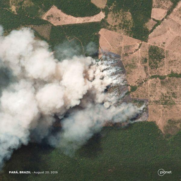 """Die """"grüne Lunge"""" unseres Planeten brennt: Im Amazonas-Regenwald wüten 2019 die schlimmsten Brände seit Jahren. (Bild: 2019, Planet Labs Inc. All Rights Reserved)"""
