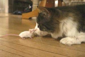 13-09-19 Katze-Maus.jpg