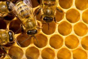 13-10-22-bee.jpg