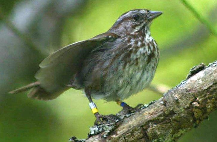 13-12-03-sparrow.jpg
