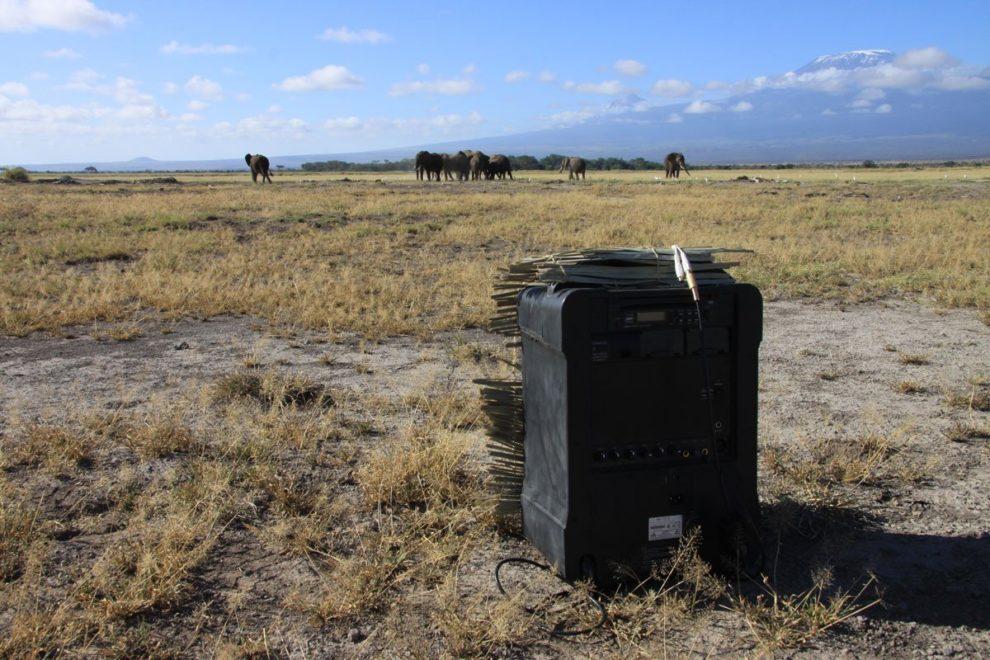 14-03-10 Elefanten.jpg