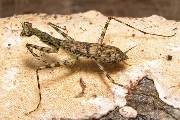 14-03-18-mantis.jpg