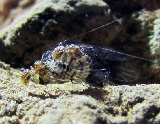 14-04-17 Insekten.jpg