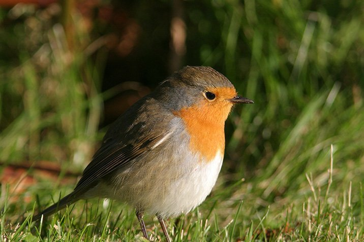 14-05-07-birds.jpg