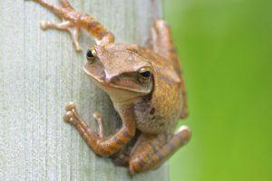 14-06-04_frog.jpg