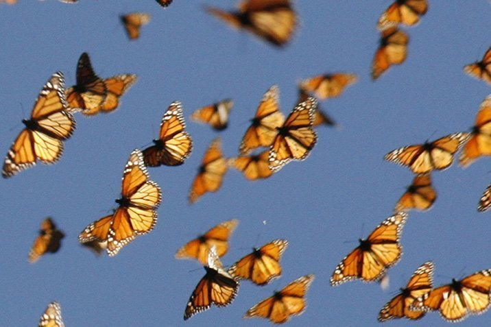 14-06-24-monarch.jpg