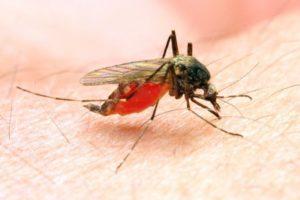 14-06-30 Malaria.jpg