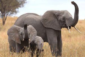 14-07-22-elefant.jpg