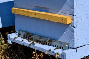 14-07-24 Bienen.jpg