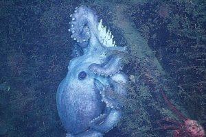 14-07-30-octopus.jpg