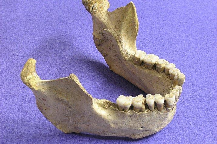 14-08-20-neandertaler.jpg