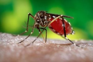 14-08-22-dengue.jpg