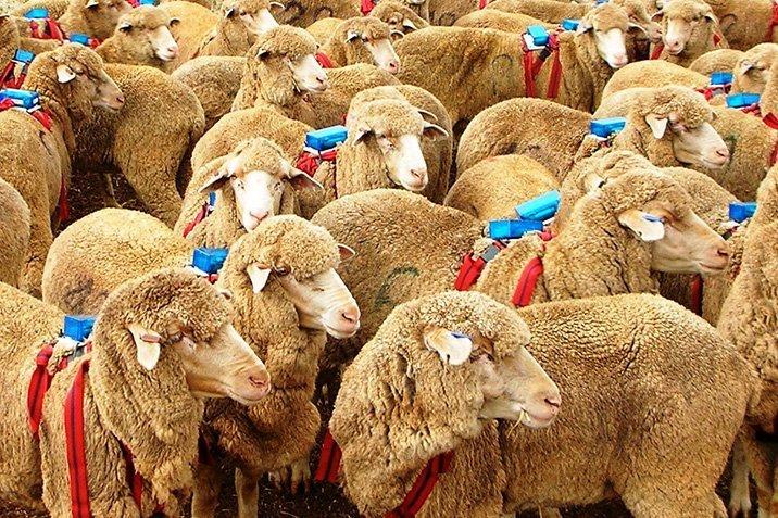 14-08-26-sheep.jpg