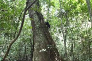 14-10-27 Schimpansen.jpg