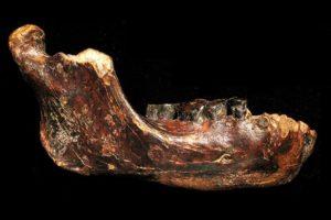 15-01-27-fossil.jpg
