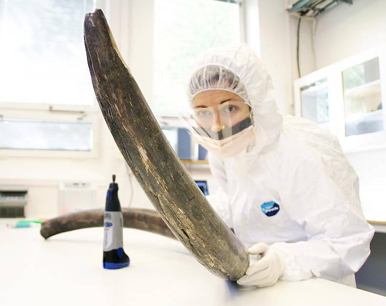 15-04-23 Mammut.jpg