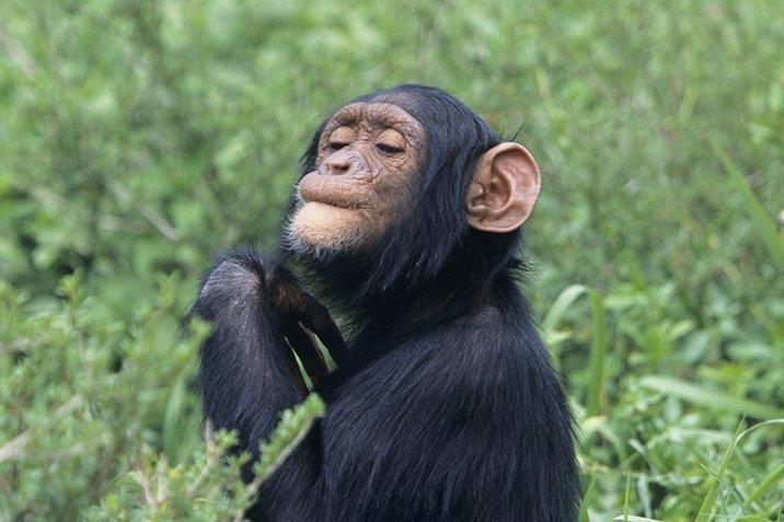 15-06-02-chimp.jpg