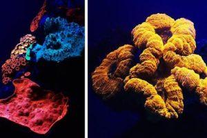 15-06-25 Korallen.jpg