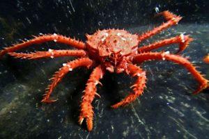 15-09-28 Krabbe.jpg