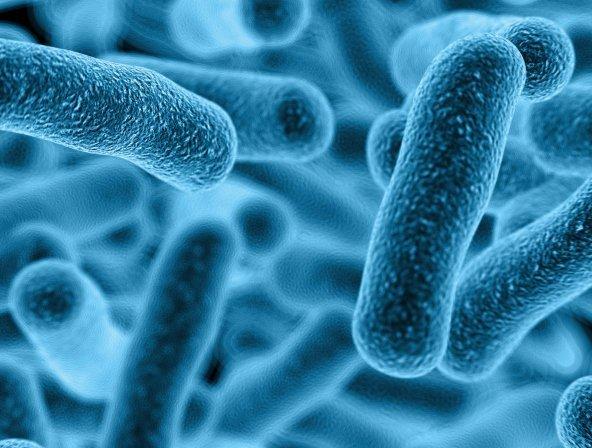 15-10-21 Bakterien.jpg