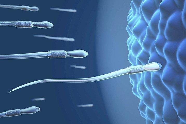 15-11-10-spermien.jpg
