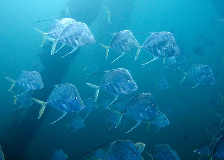 15-11-19 Fische.jpg