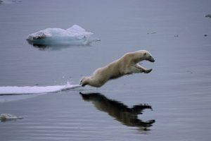 Das Eis schmilzt.