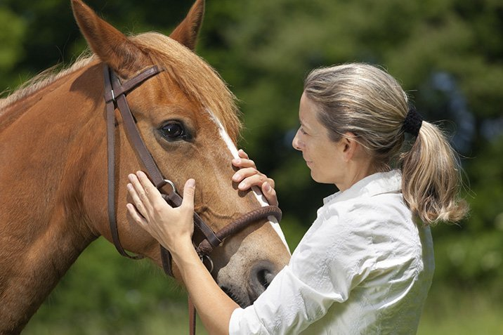 16-02-09-pferd.jpg