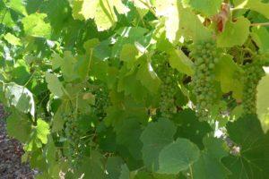 16-03-21 Weinbau.jpg