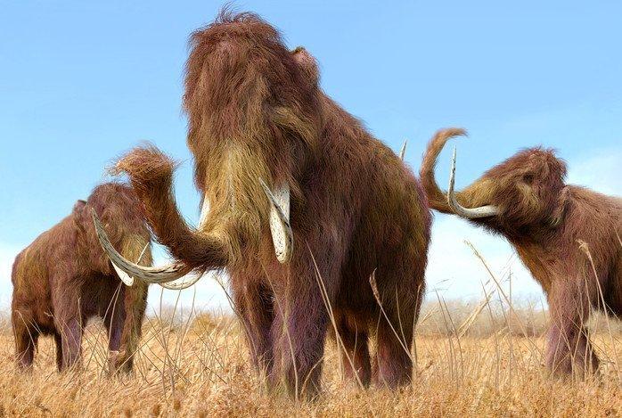 16-08-01 Mammuts.jpg