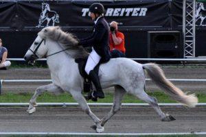 16-08-08 Pferd.jpg