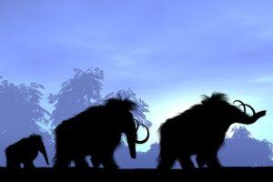 16-08-29-mammut.jpg