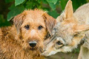 16-09-01-wolf.jpg