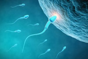 16-10-28-spermium.jpg