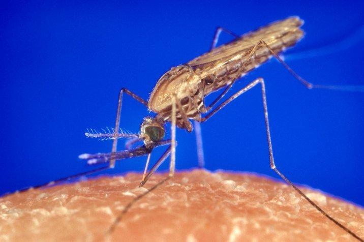 16-11-14 Mücken 2.jpg
