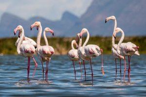 16-11-26 Flamingos.jpg