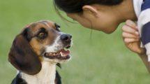 17-01-10-hund.jpg