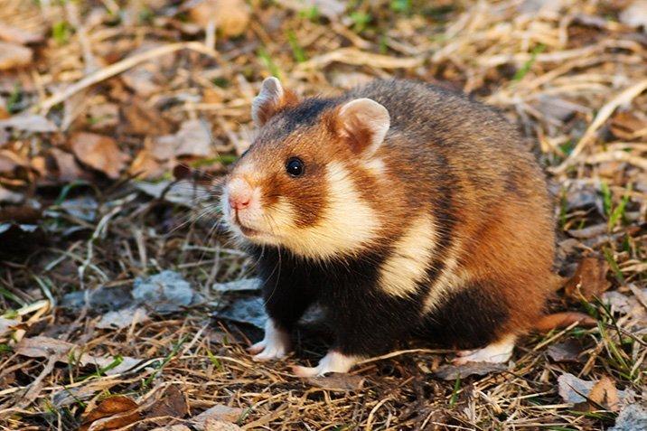 17-01-17-hamster.jpg