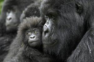 17-01-18-primaten.jpg
