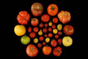 17-01-27-tomaten.jpg