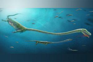 17-02-14-reptil.jpg