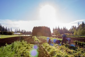 17-03-10-biolandbau.jpg
