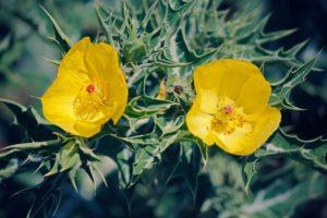 17-05-17 Kommentar Pflanzenmedizin.jpg