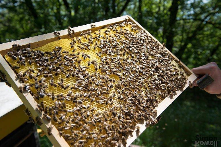 17-10-05 Bienen.jpg
