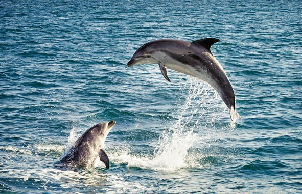 Delfin und Co: soziale Großhirne wie wir - wissenschaft.de