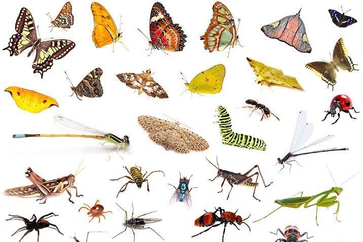 deutschland verliert seine insekten. Black Bedroom Furniture Sets. Home Design Ideas