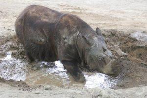 17-12-14 Rhino.jpg