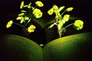 17-12-21+Leuchtpflanze_Seite.jpg